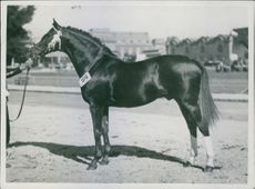 A horse in Palermo, Buenos Aires, 1945.