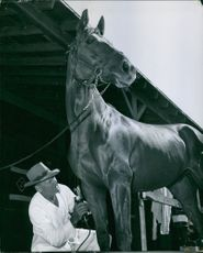 A horse keeper cleaning the horse.
