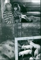 Man with his daughter looking at the young ones of a swine feeding.