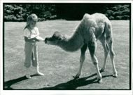 Animal Camel:Robinson and 5yr old jamie.