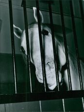 Horse behind bars.