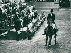 """Princess Anne competes on the horse """"Purple Star"""""""