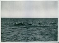 Germans trying to escape from Cape Bone in Tunisia sighted and picked up by British war-ships.