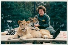 Animal Lion:Head keeper ian gordon brundes with young lion.