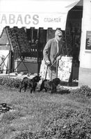Duke of Windsor Edward walking his dogs.