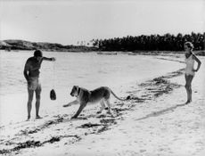 A scene from a film where a man and a woman is interacting with a lion on the beach. 1966