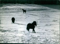 A portrait of horses in snow.