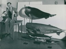Sculptor Ernst Joessaar with his newly sculpted selection models of a Greenland election and a kaskelot at the National Museum