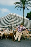 Thousands may be released on the Promenade des Anglais in protest against the wolf stock in the area