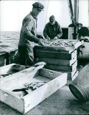 Men selecting fishes in boat.
