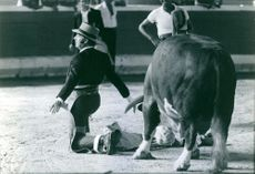 Man in a bullring with a bull. 1972