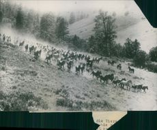 A group of horse running together in the forest.