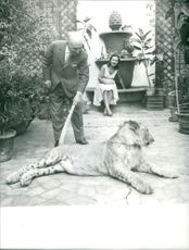 A man giving order to lioness to get up.