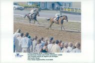 Palatal with Fredrik Johansson in the saddle won the Swedish Derbyt at Jägersro. Here in front of Songli