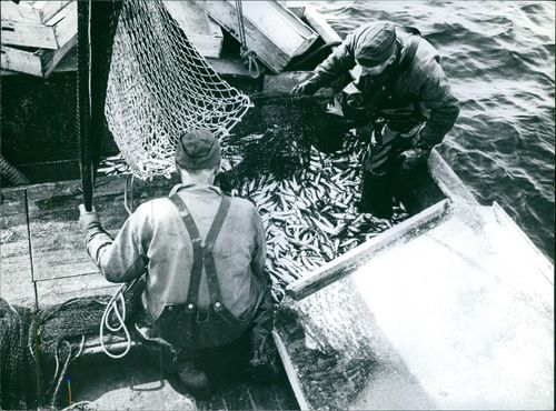 Fishermen standing on boat and looking fishes in the net.