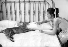 Carroll Baker playing with cub.