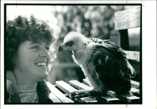 Tawny Eagle being admired by Melanie Gilbert.