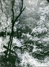 Soldiers and officers standing in the forest.