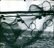 Net in disorder condition.   1968