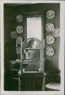 A parrot in the cage.A parrot in the cage.
