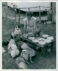 Mrs. Patrick serving lunch to puppies.