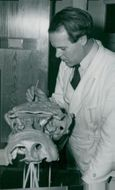 Dr. E. Jarvik with a wax plate model of fossil fish at the National Museum