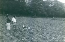 People in farmland with dog.