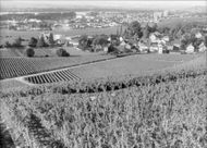 Wineries in the Rhine Valley