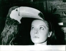 Woman looking towards the beak of a toucan bird.  Taken - 14 Nov. 1960