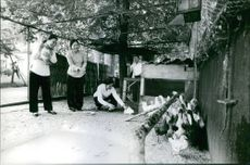 Nguyễn Thị Bình along with four other women in a village small chicken and duck farm.   Date: 6 Oct. 1971