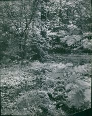 A forest in 1946.