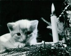 A kitten pictured laying near the candle.