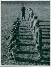 Norwegian police training with the dogs during the war, Sweden 1944.