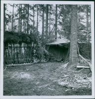 View of a tent house in the forest.1940