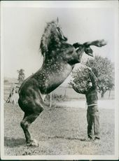 "A horse trainer trains a horse in the field.  ""horses, working""  1944"