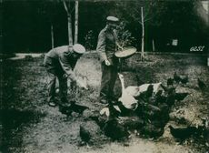 German soldiers feeding ducks and chickens, after the first world war.