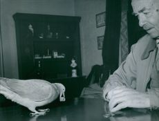 A photo of Pussi spends the evening playing dice with his foster-father, Mr. Sondergaard. 1957