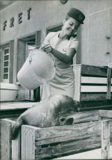 Woman pouring water on seal.
