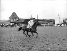 Horse racing in ground, spectators watching them.