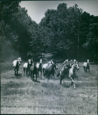 A rider and horses running.