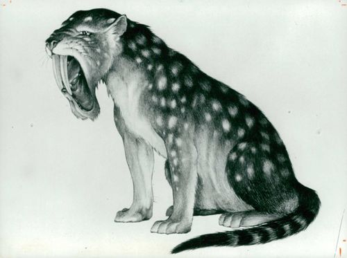 Starved out of existence: The Sabre-Toothed Cat