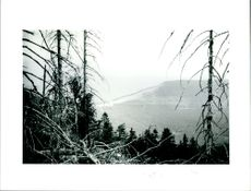 Acid Rain damage to conifers in black forest.