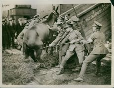 People trying to put the horse in cart during World War I.