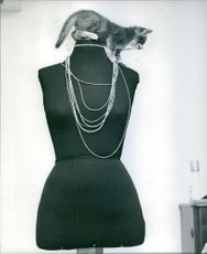 A photo of a kitten sitting on the neck of a mannequin biting the necklace of it being displayed on a shop.