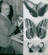 Linnaeus researcher Felix Join some of the Swedish National Museum's new butterflies