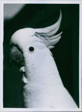 A photograph of a parrot.