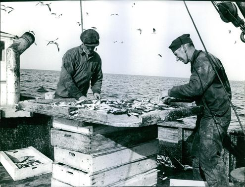 Fishermen standing on the boat, holding and collecting fishes.