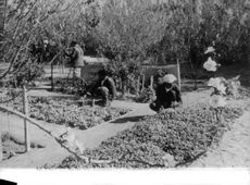 Three men planting plants and flowers in the ground.