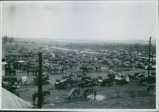 Large number of horse carts in  the huge ground.