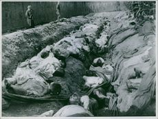 Dead people from the war were ready to get buried. 1951.